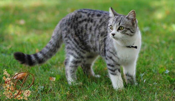 Пословицы и поговорки про кошек и котов