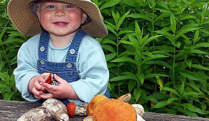 Загадки для детей про грибы с ответами